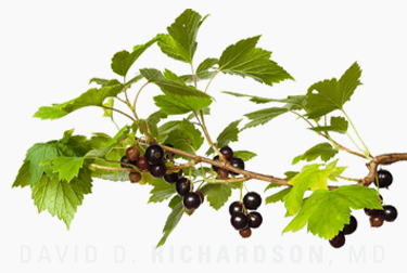 Black Currant for Glaucoma